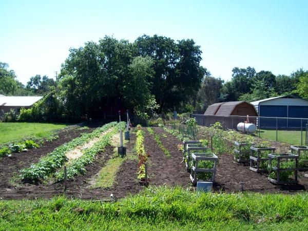 My Grandpa's Garden 2011